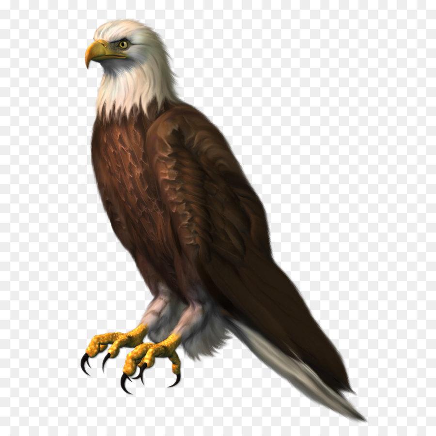 Sea Bird Png Download 963 1328 Free Transparent Bald Eagle Png Download Cleanpng Kisspng