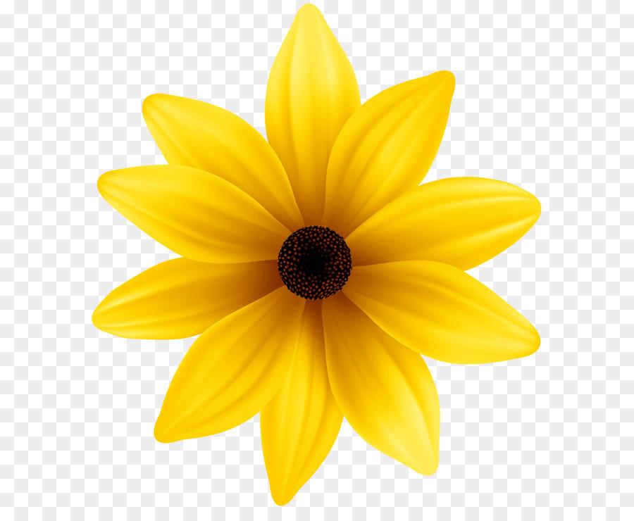 Fiori Gialli Png.Giallo Dahlia Petalo Fiore Giallo Png Clip Art Immagine
