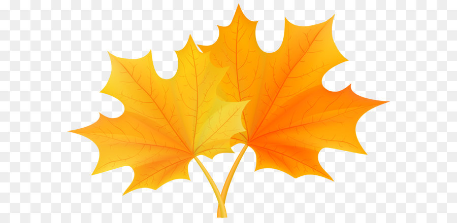 Birthday Cartoon Png Download 8000 5321 Free Transparent Autumn Leaf Color Png Download Cleanpng Kisspng