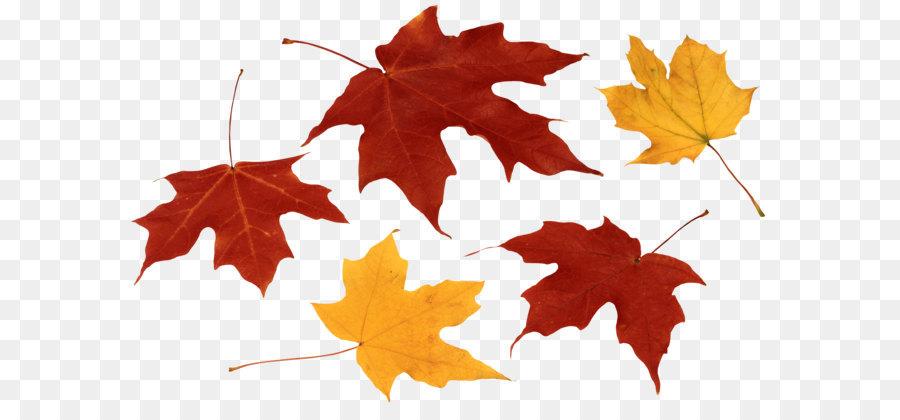 Green Leaf Background Png Download 3784 2372 Free Transparent Leaf Png Download Cleanpng Kisspng