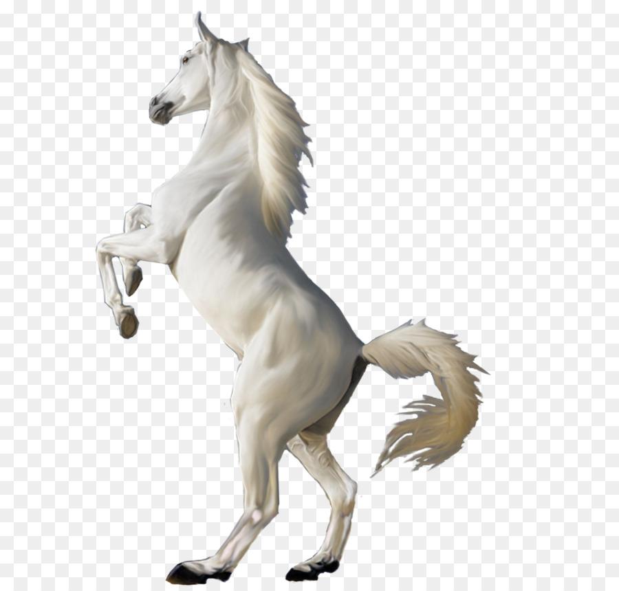 Horse Cartoon Png Download 778 1026 Free Transparent Arabian Horse Png Download Cleanpng Kisspng Download transparent horse png for free on pngkey.com. free transparent arabian horse png