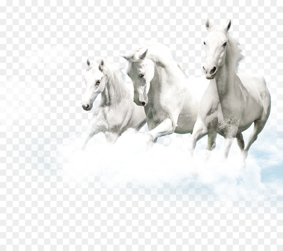 Friesen Lipizzan Ceramic White Wallpaper Pegasus Element