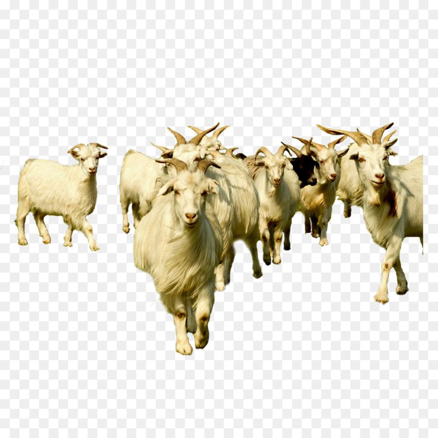 Goat Cartoon Png Download 1000 1000 Free Transparent Goat Png Download Cleanpng Kisspng