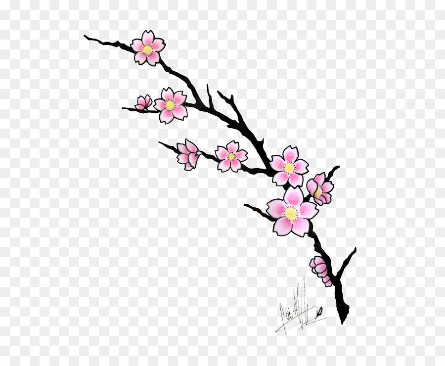 Cherry Blossom Tree Drawing Png Download 600 735 Free Transparent Cherry Blossom Png Download Cleanpng Kisspng