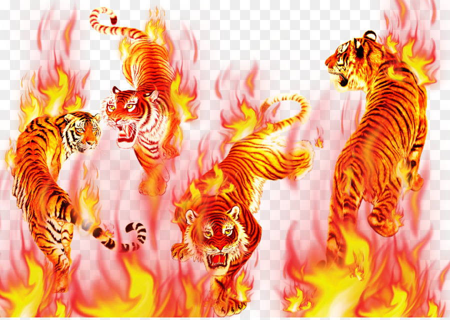 картинки огня и тигров гриб непременно хорошо