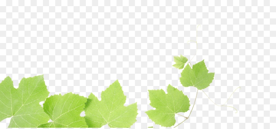 Green Grass Background Png Download 940 434 Free Transparent Common Grape Vine Png Download Cleanpng Kisspng