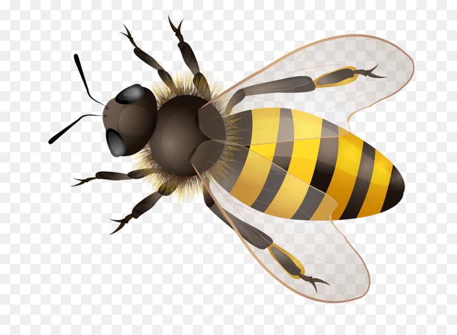 пчела в пнг на прозрачном фоне сегодня пост буду