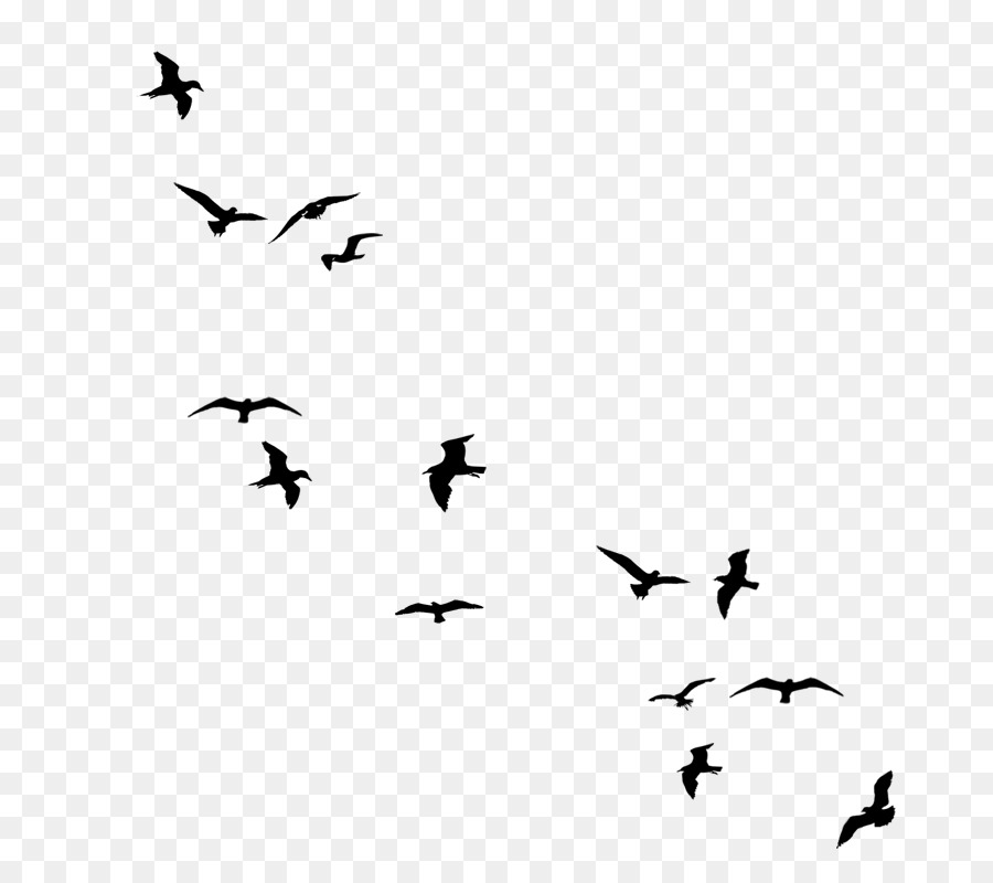 Flying Bird Background png download - 800*800 - Free