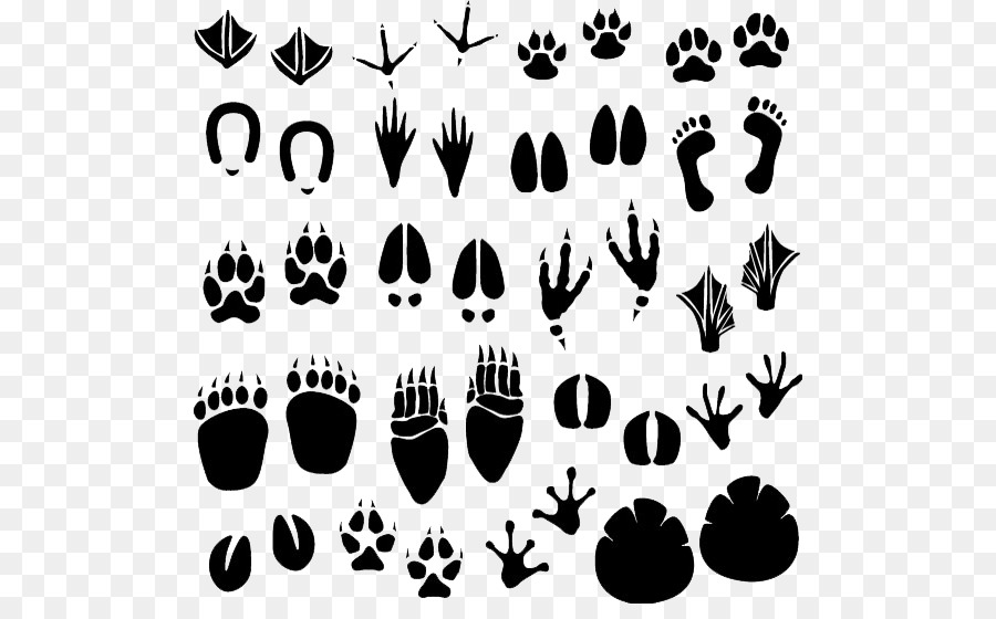 Animal Cartoon Png Download 550 546 Free Transparent Footprint Png Download Cleanpng Kisspng Elephant and rabbit , elephant star rabbit illustration, elephants and rabbits stars transparent background png clipart. animal cartoon png download 550 546
