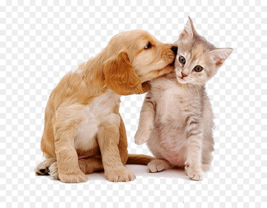 Dog And Cat Png 804 692