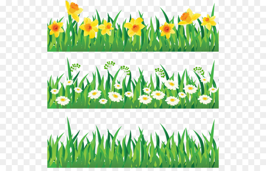green grass background png download 580 571 free transparent herbaceous plant png download cleanpng kisspng free transparent herbaceous plant png