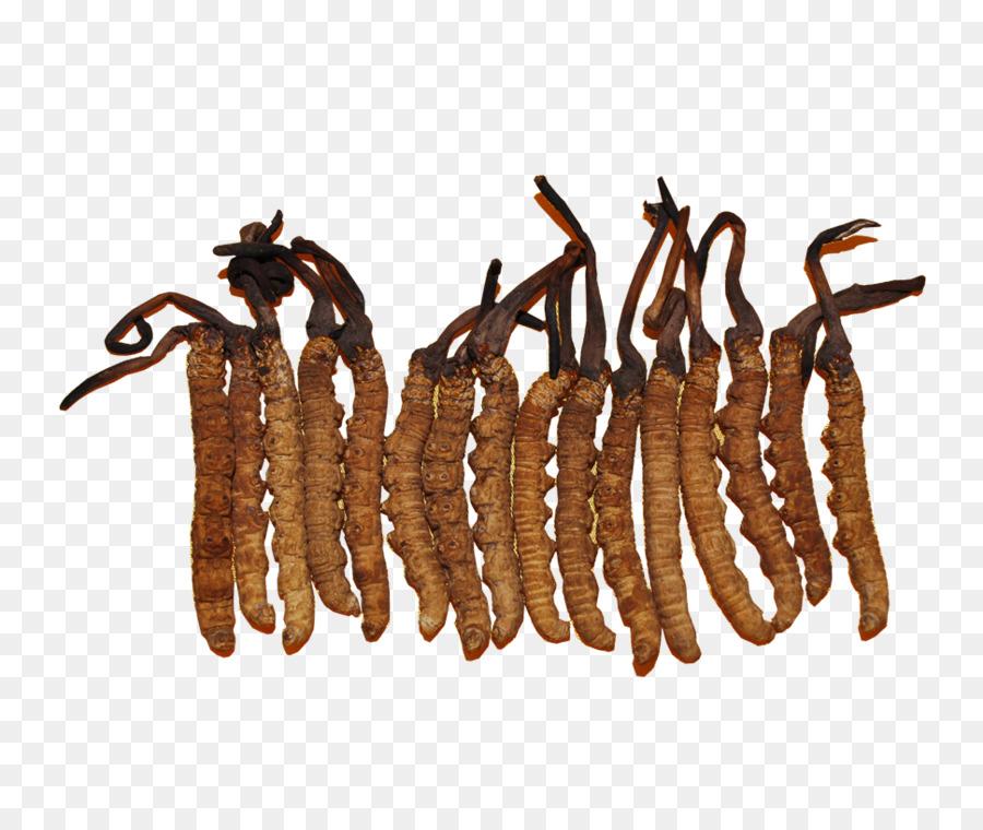 DRUG POSTER Mushroom Caterpillar