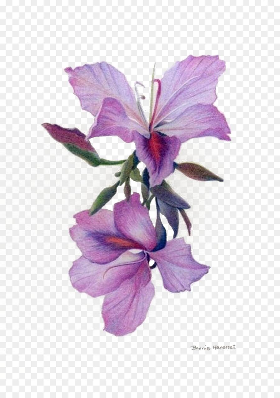 orchidee zeichnung bleistift  malvorlagen gratis