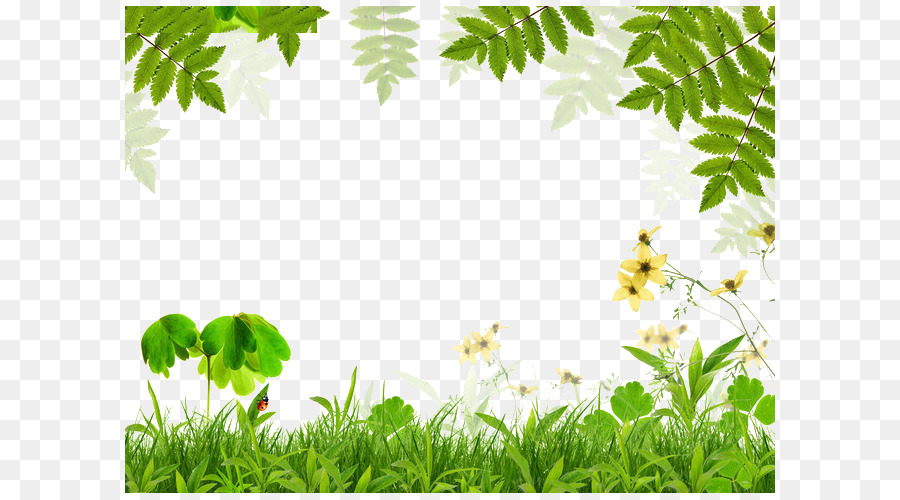 nature background frame png download 650 500 free transparent green png download cleanpng kisspng nature background frame png download