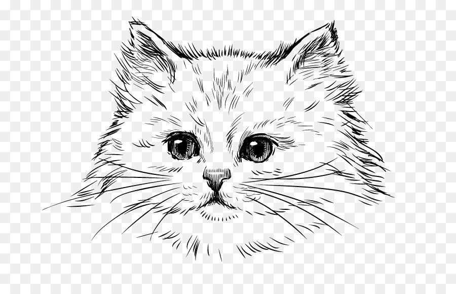 Kitten Cartoon Png Download 800 568 Free Transparent Persian Cat Png Download Cleanpng Kisspng