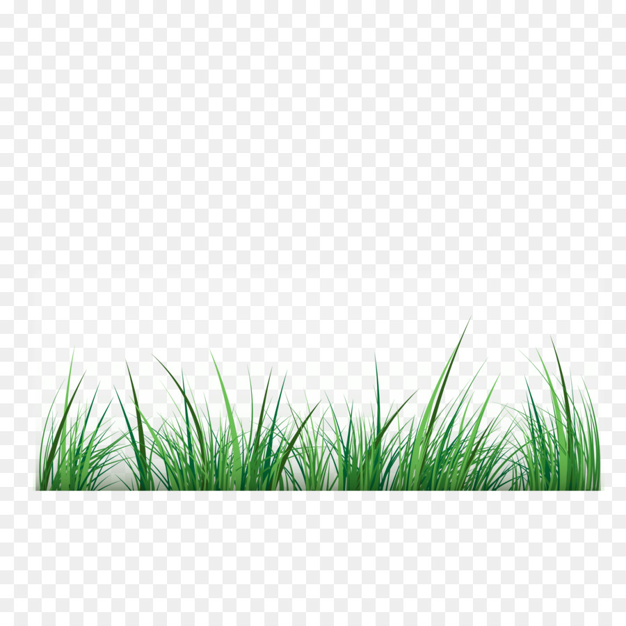 green grass background png download 3125 3125 free transparent green png download cleanpng kisspng green grass background png download