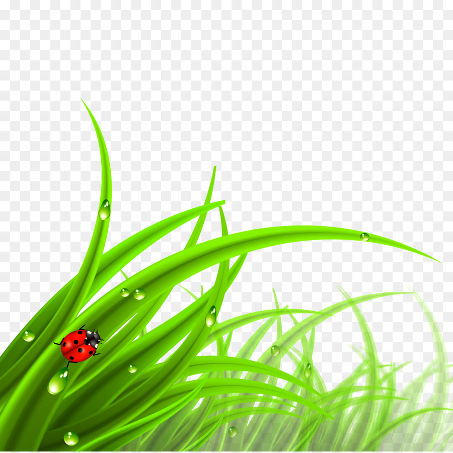 green grass background png download 2244 2237 free transparent cdr png download cleanpng kisspng green grass background png download