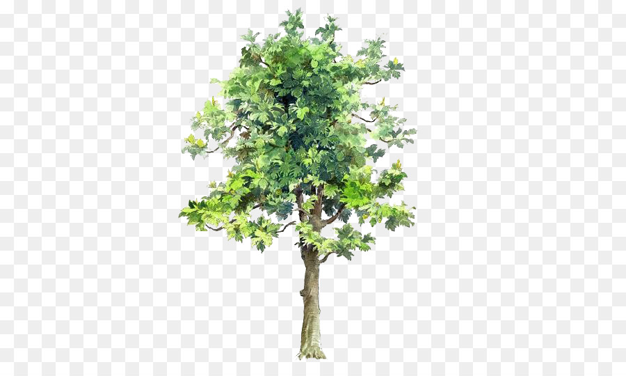 Baum Zeichnung Aquarell Malerei Architektur Baume Gemalt Baume