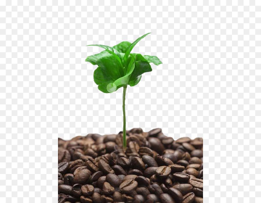 leaf branch png download 500 700 free transparent coffee png download cleanpng kisspng leaf branch png download 500 700