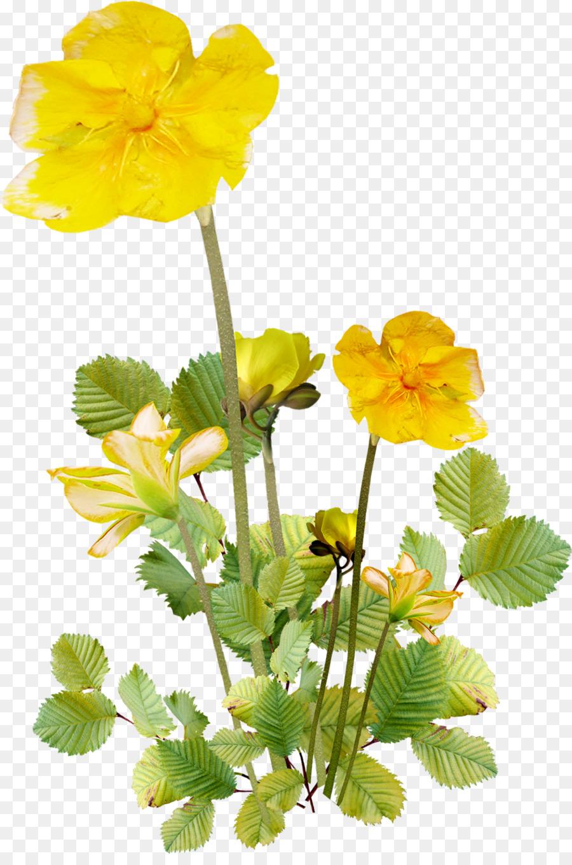 цветок лютик картинка на прозрачном фоне том, что