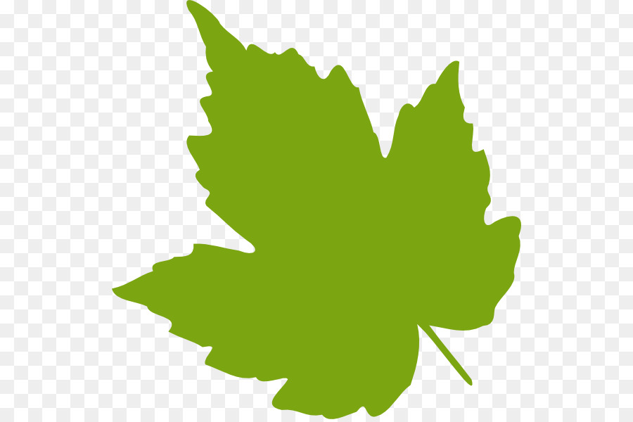 Autumn Leaves Drawing Png Download 582 596 Free Transparent Grape Leaves Png Download Cleanpng Kisspng
