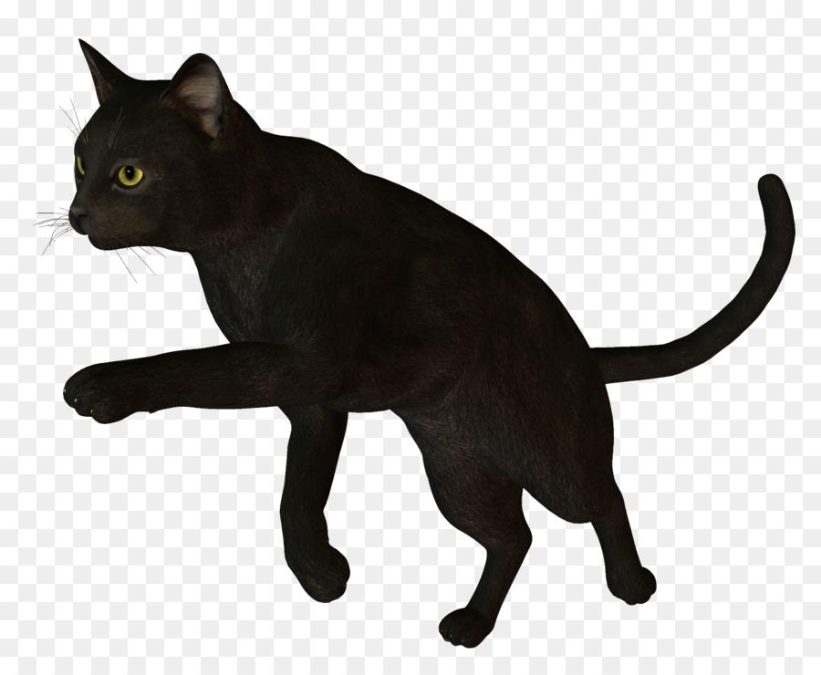 картинка черного кота без фона лучше светлое время