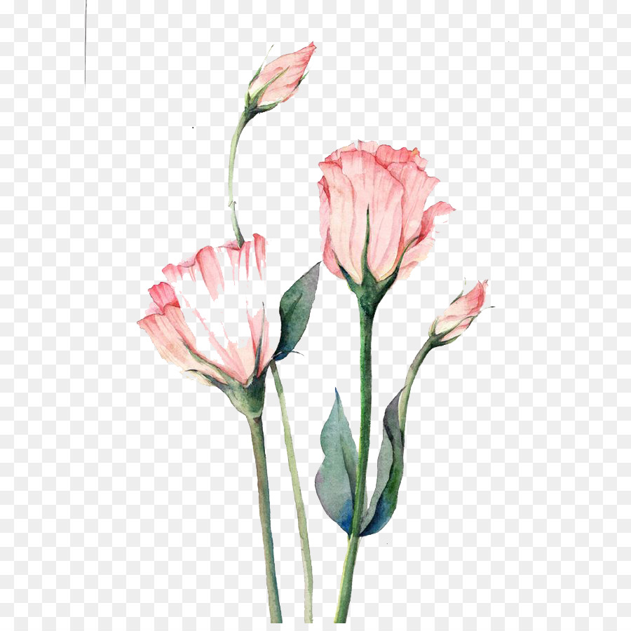 Watercolor Pink Flowers Png Download 658 889 Free Transparent
