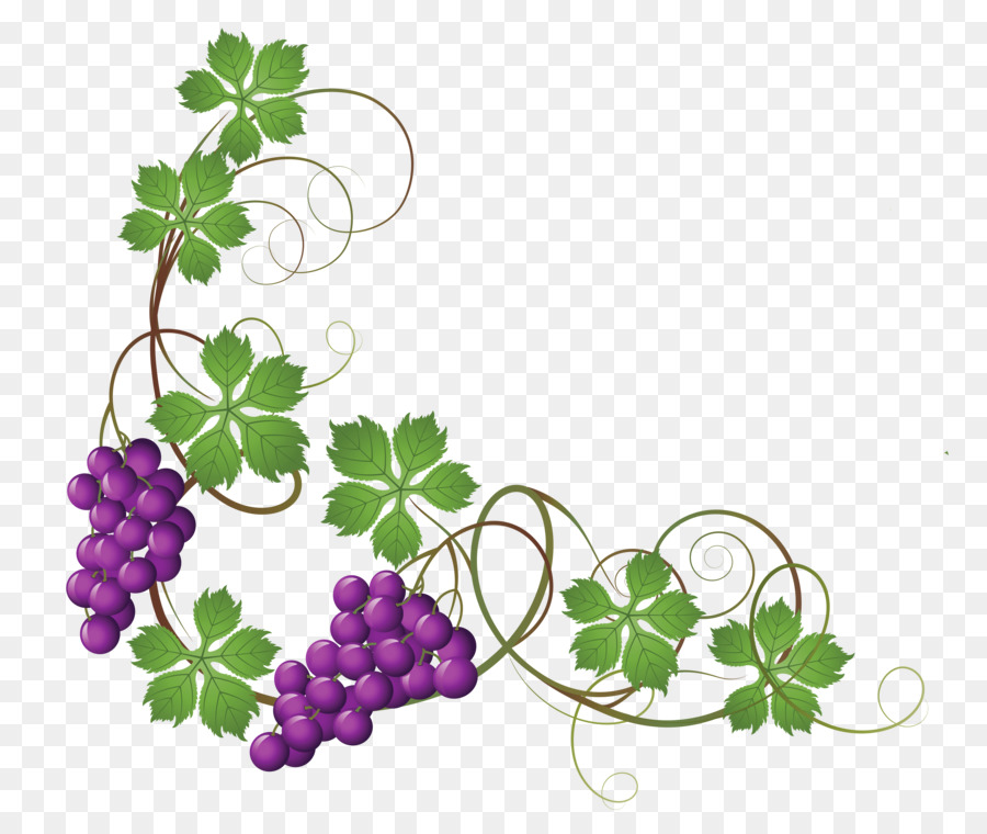 Family Tree Design Png Download 4340 3658 Free Transparent Common Grape Vine Png Download Cleanpng Kisspng