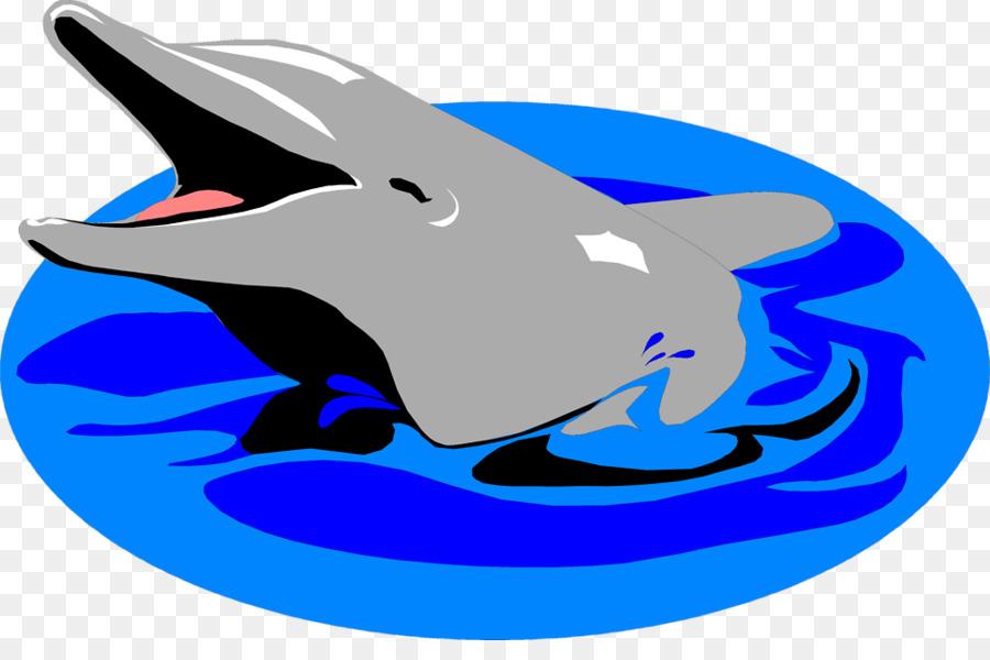 delfine bilder kostenlos