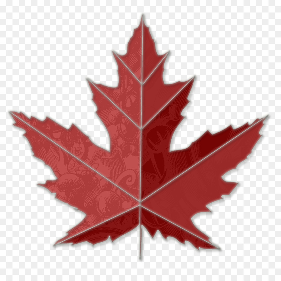 Canada Maple Leaf Png 1000