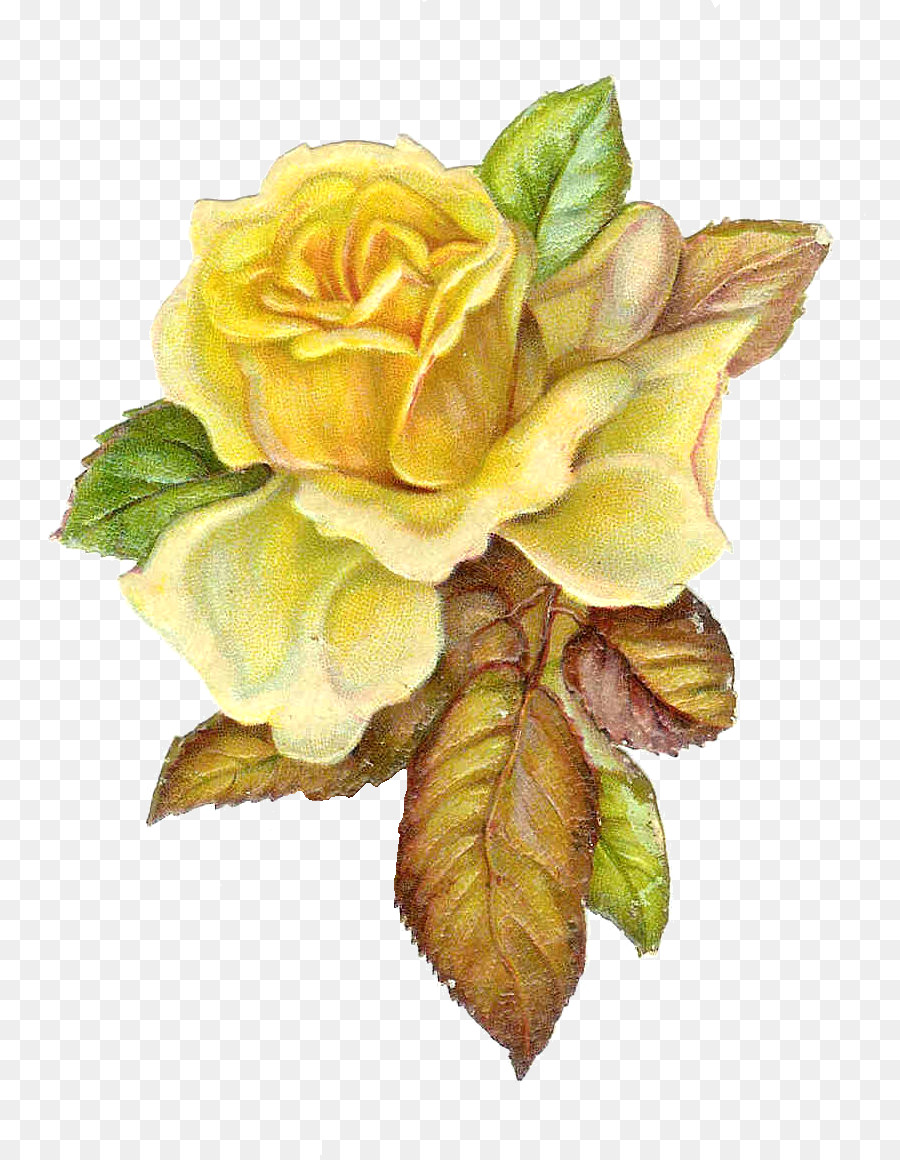 Free Flowers Buckle Creative Rose Yellow Rose, Rose Clipart, Rose, Yellow  Rose PNG Transparent Clipart Image and PSD File for Free Download | Rose  clipart, Yellow roses, Rose