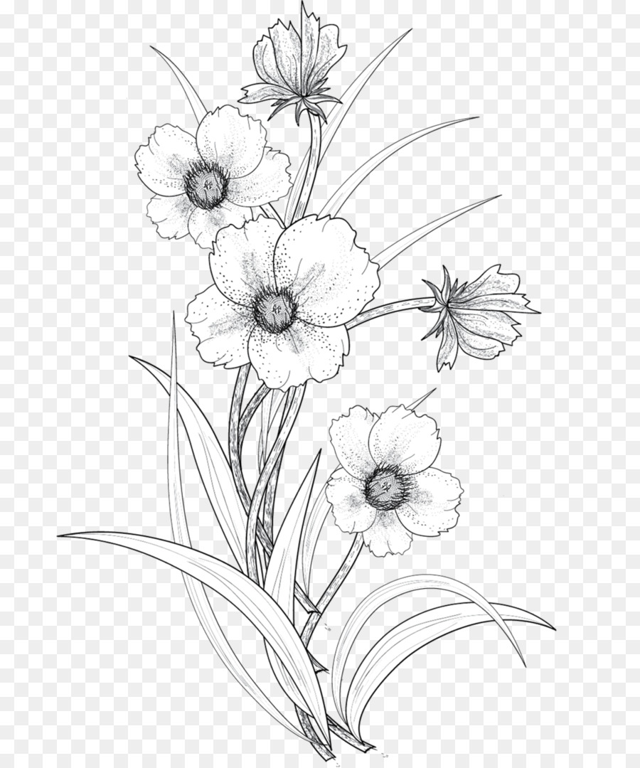 Black And White Flower Png Download 741 1079 Free Transparent Drawing Png Download Cleanpng Kisspng