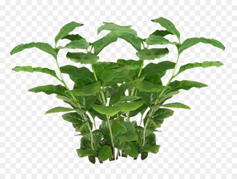Leaf Texture Png Download 957 705 Free Transparent Plant Png Download Cleanpng Kisspng