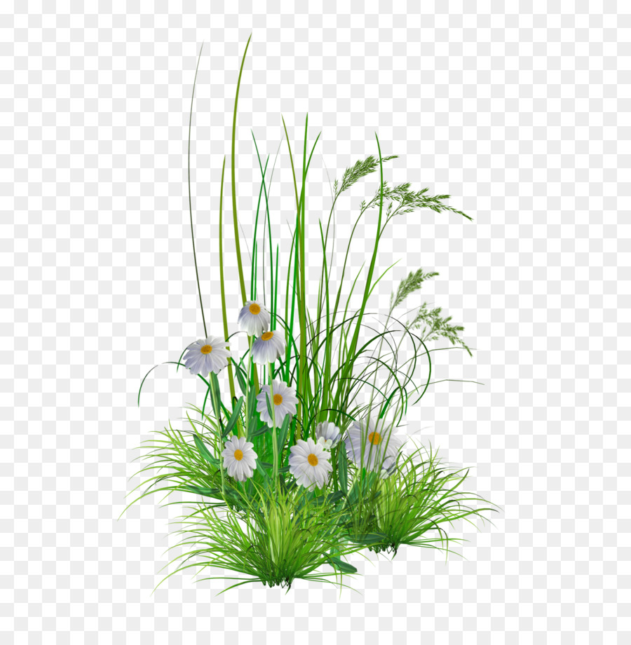 Floral Flower Background Png Download 1703 1727 Free Transparent Flower Garden Png Download Cleanpng Kisspng