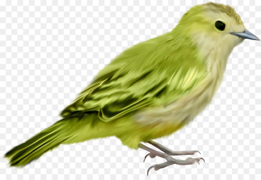 vogel bild clipart vogelhaus
