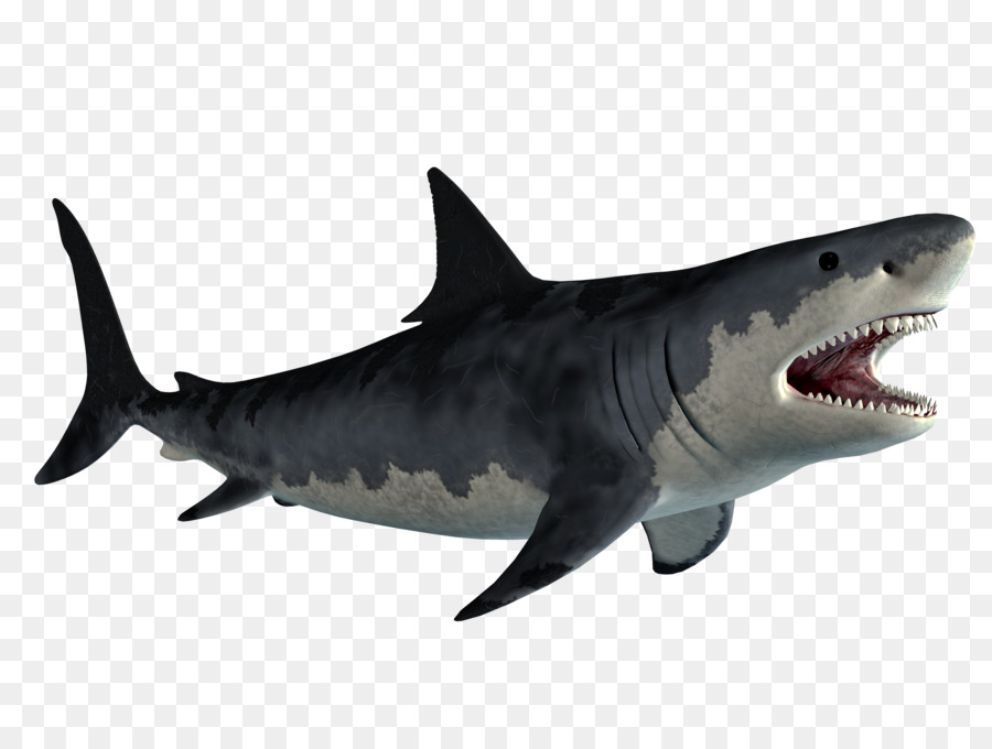 great white shark background png download 2500 1875 free transparent lamniformes png download cleanpng kisspng great white shark background png