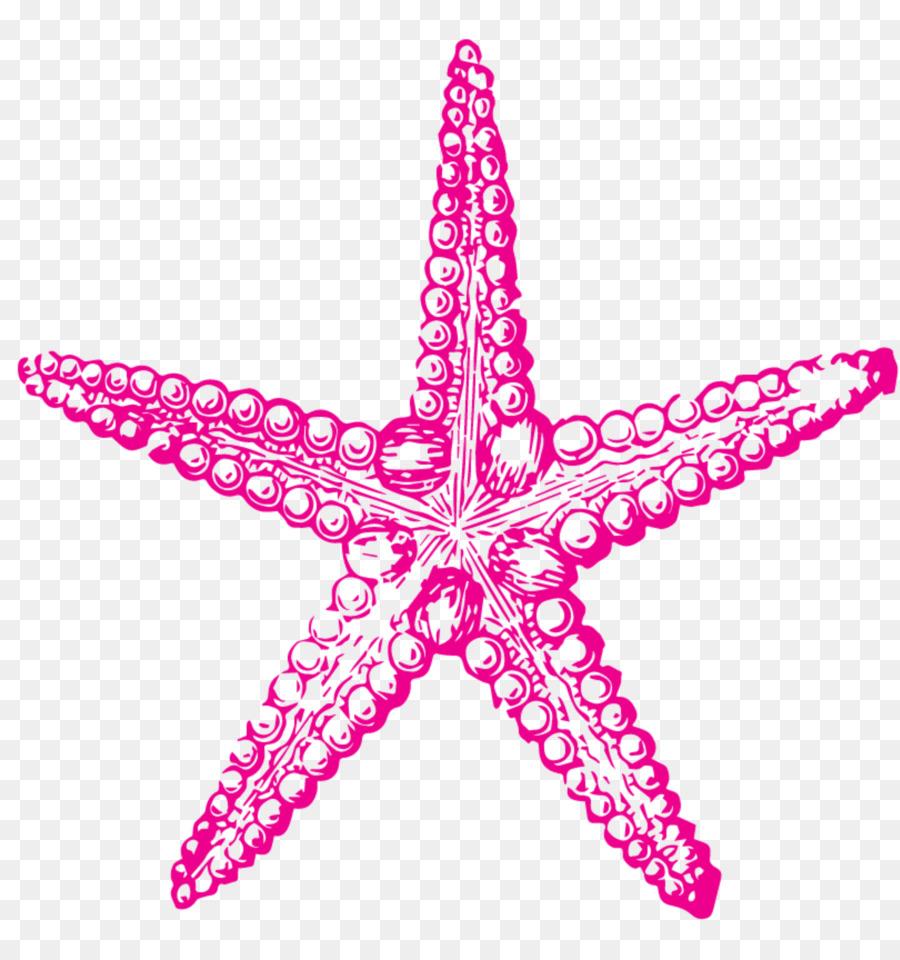 Riccio Di Mare Il Disegno Stelle Marine Clip Art Stella Marina