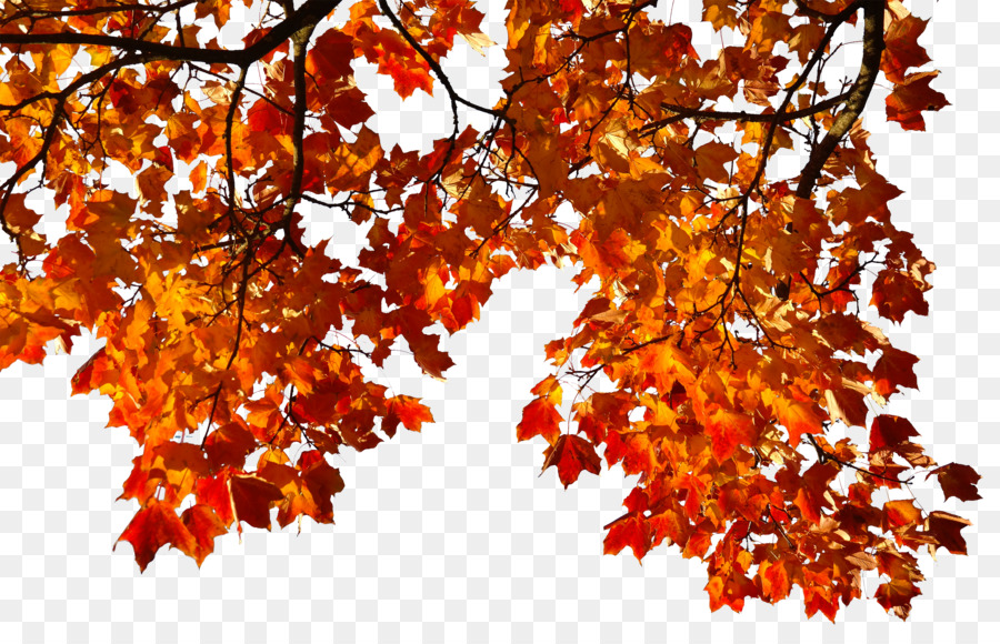Autumn Tree Branch Png Download 3000 1919 Free Transparent Autumn Png Download Cleanpng Kisspng