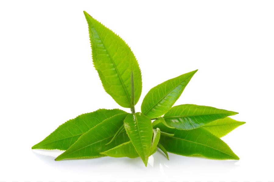 Green Tea Leaf Png Download 1690 1124 Free Transparent Tea Png Download Cleanpng Kisspng