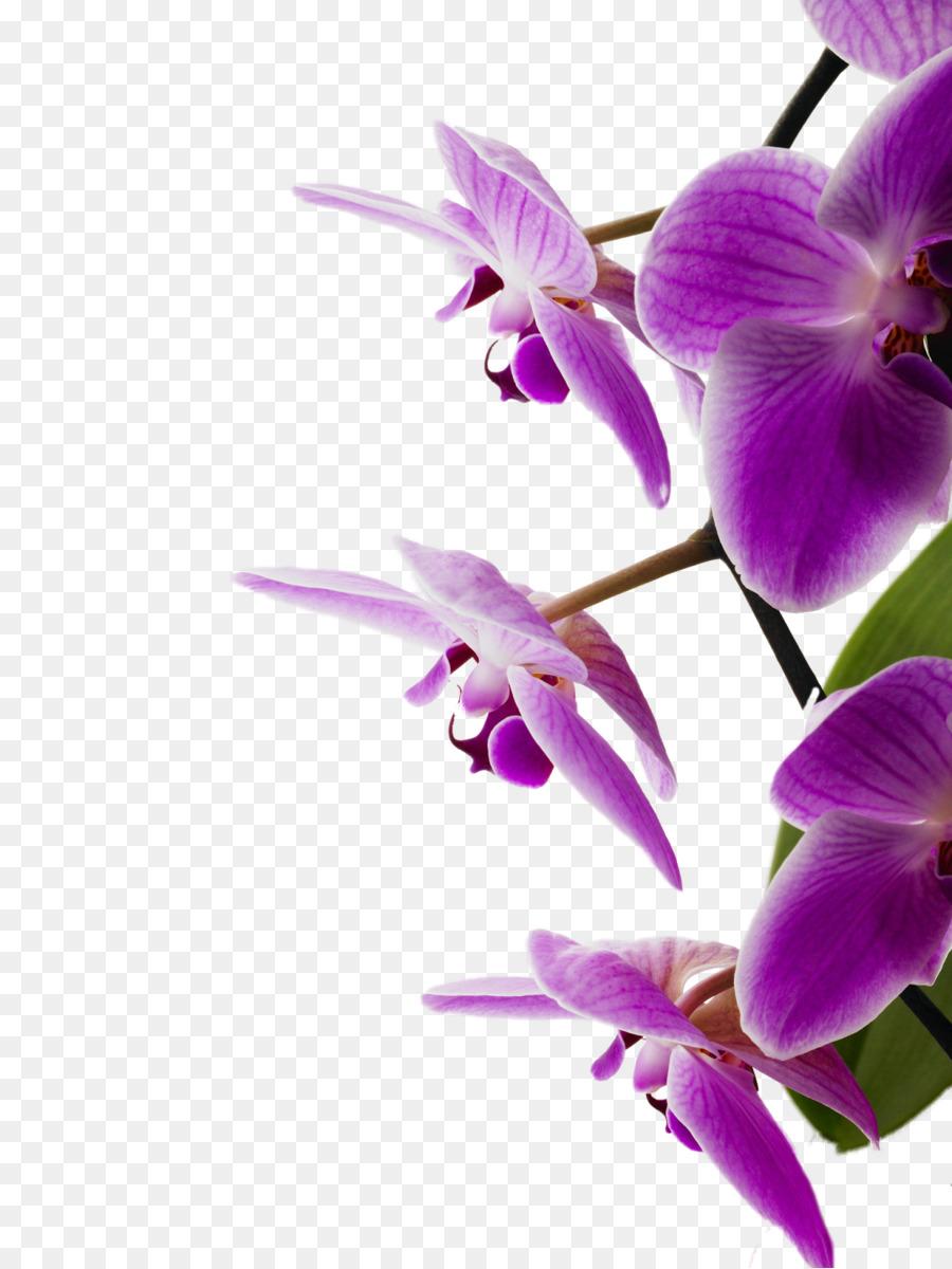 Schlafzimmer Orchideen Veilchen - Orchidee png herunterladen ...