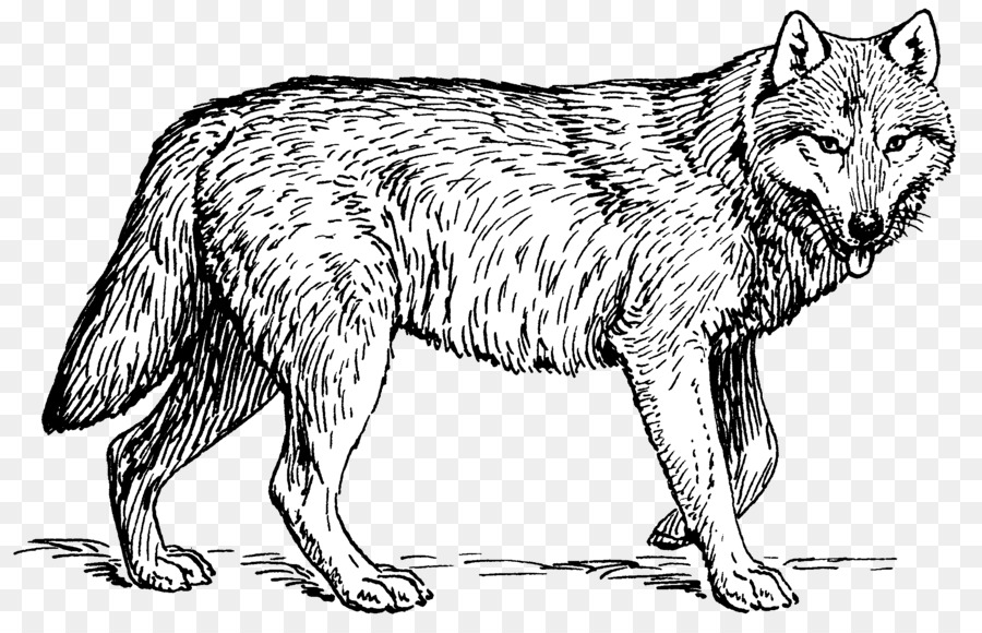 Welpen Arctic wolf Coloring book Pack Clip-art - Wolf png ...