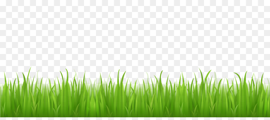 green grass background png download 1667 724 free transparent lawn png download cleanpng kisspng green grass background png download