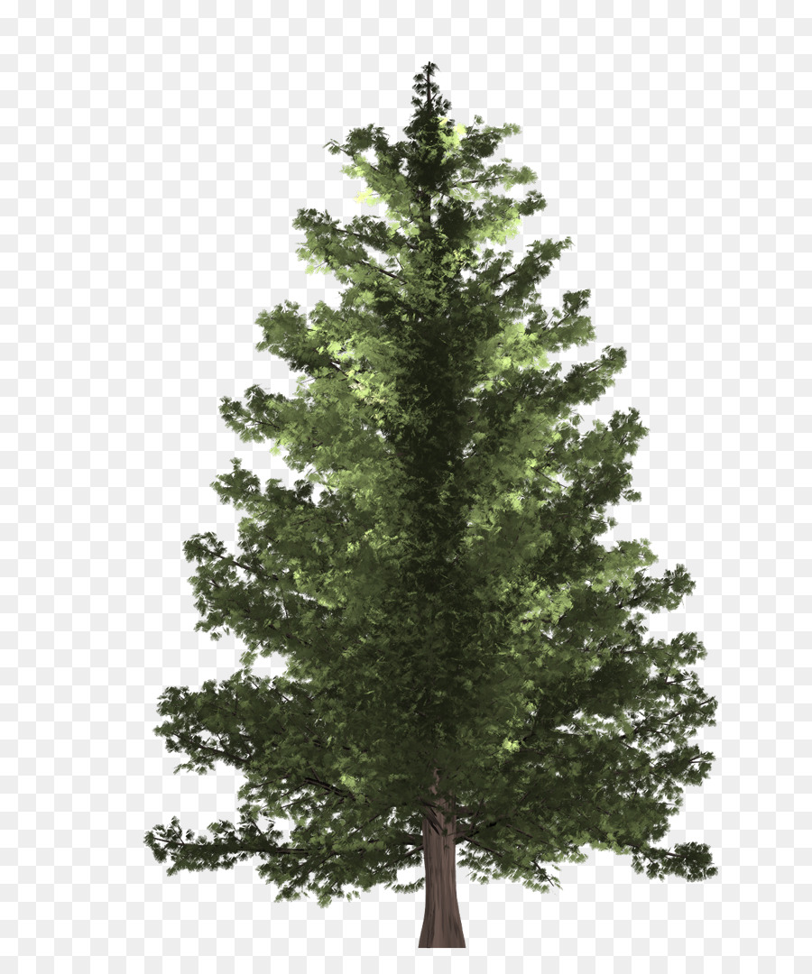 Christmas Tree Branch Png Download