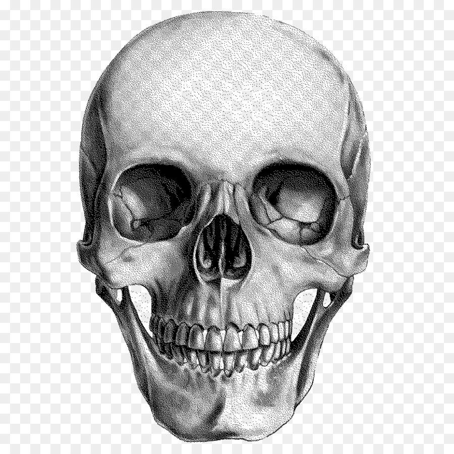 Human Skull Drawing Png Download 932 932 Free Transparent Skull Png Download Cleanpng Kisspng