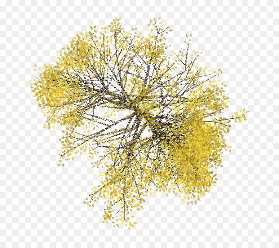 Tree Plan Png Download 713 799 Free Transparent Tree