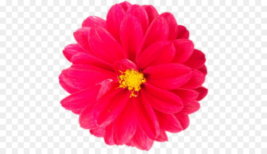 Schneiden Sie Die Blumen Dahlie Blute Rot Vektor Png