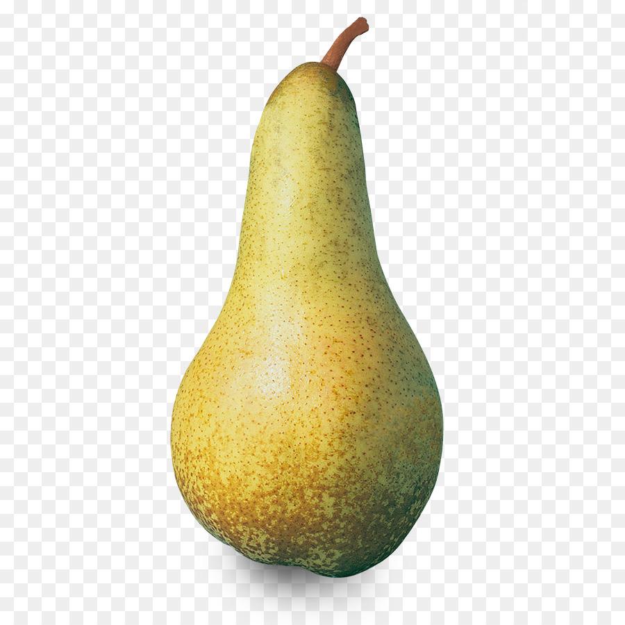 kisspng-pisa-conference-pear-abate-fetel