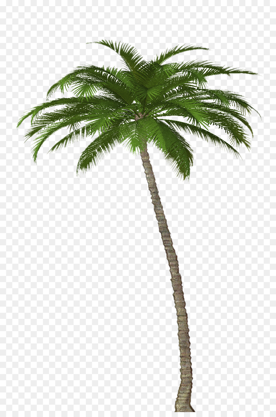 Palm Oil Tree Png Download 872 1344 Free Transparent Attalea Speciosa Png Download Cleanpng Kisspng Reproduction and growth attalea speciosa is monoecious—male and female flowers are separate, but are borne by the same plant. palm oil tree png download 872 1344