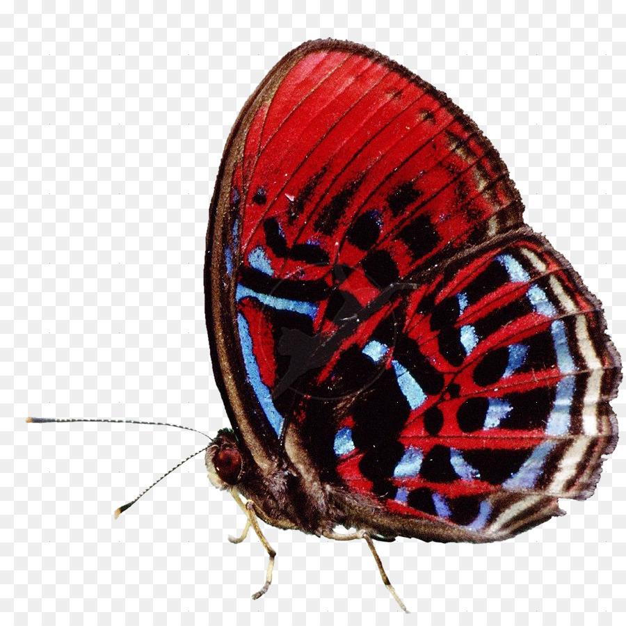 Caterpillar Cartoon Png Download 892 882 Free Transparent