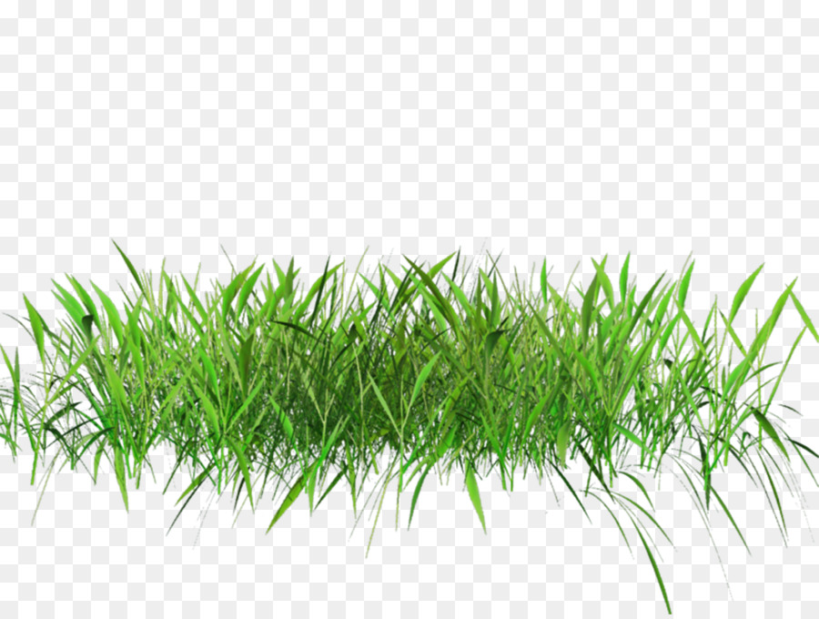 grass background png download 1024 768 free transparent lawn png download cleanpng kisspng free transparent lawn png download